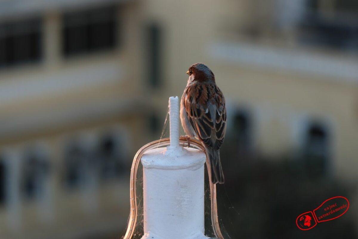 Udaipur – Ranakpur